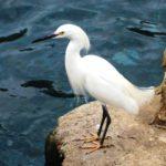 pi-egret1