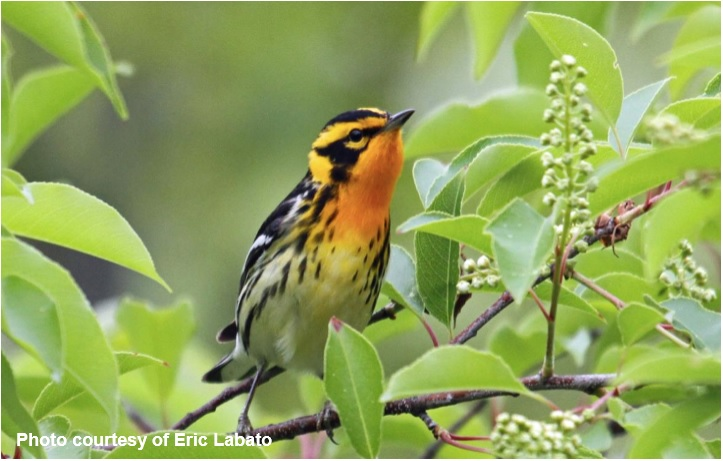 Flyer Bird