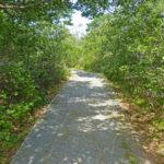 Pines Trail