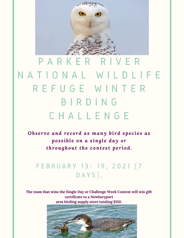New Birding Challenge Flyer