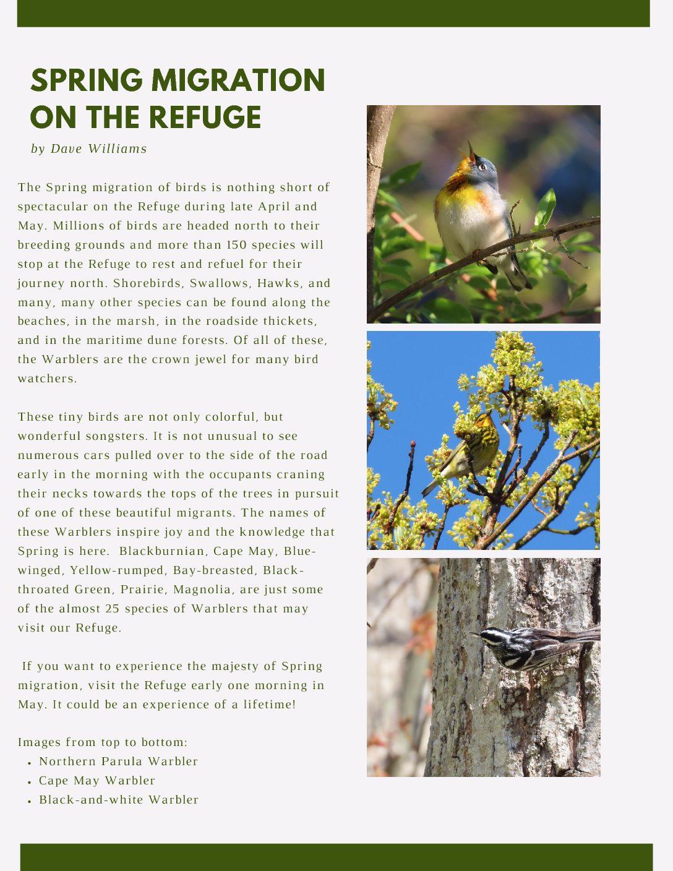 Spring Migration on the Refuge