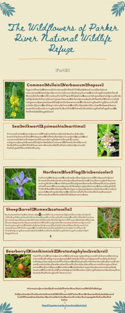 The Wildflowers of Parker River National Wildlife Refuge Part 3