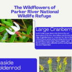Wildflower Thumbnail