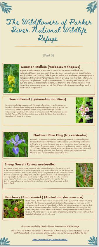 Wildflowers part 3