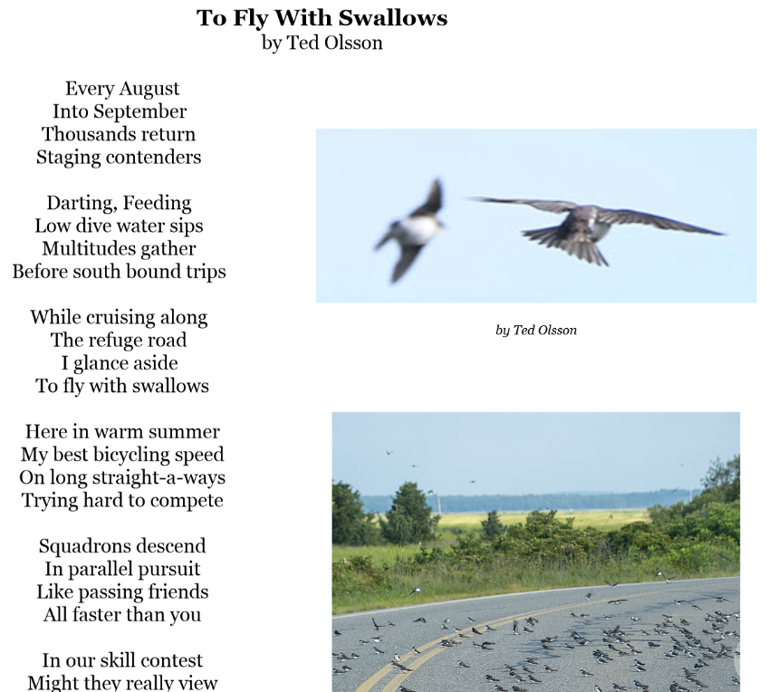 To Fly with Swallows